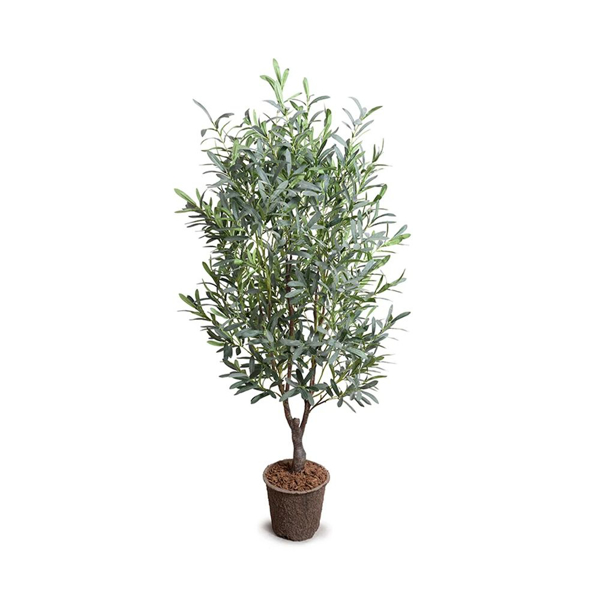 Picture of OLIVE TREE, 5'