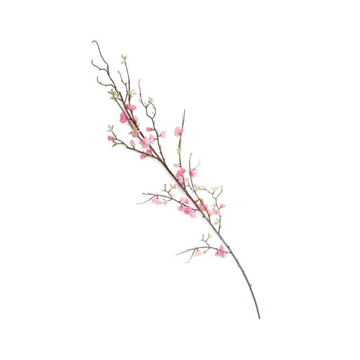 Picture of CHERRY BLOSSOM BRANCH, PK
